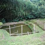 fish pool