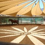 Miraval: Equine Experience