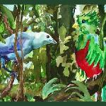 Quetzal with Blue Tanager