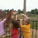 Petting the animals