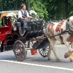 Carriage rides near Central Park