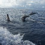 Photo de Tetepare Island Eco-lodge