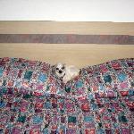 pet friendly motel