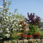 Our garden really starts to show some colour in spring.