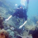 Foto di Seafari Dive Center