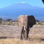 The Amboseli Shot