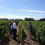 Visite de la vigne