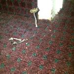 Yeah that is mushrooms growing from the carpet!
