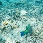 schönen Korallenriff der Nähe des Hotels