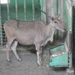 円山動物園の写真その1