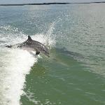 Another dolphin playing