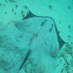 A ray taking off from the bottom  ...  awesome