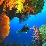 Provided by Sea Bees Diving Thailand