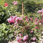 fleurs en ete