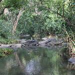 Foto de Amanvana Spa Resort, Coorg