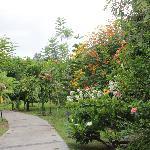 Flowery path to everywhere.
