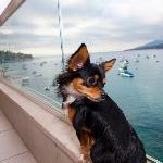 auch Hund liebt den Ausblick vom Balkon ;-)