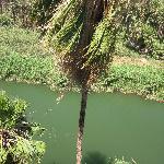 oasis muleje