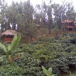 Photo of Coffea Aroma Resort - Wayanad