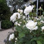Peaceful rose garden