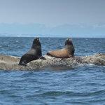 The sea lion rock