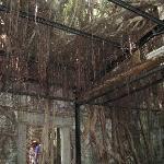 逞しい亜熱帯樹木の生命力