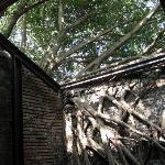 歴史と自然が織りなす独特の景観