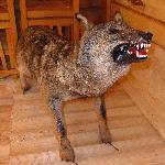 Scary stuffed wolf