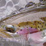 The Estes Angler is here to guide you the best wild trout fishing in the area.