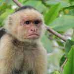 White faced monkeys!