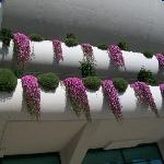 Hanging plants from all the Balconies