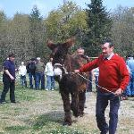 A local event, the Donkey sale and festival.