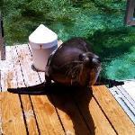 Foto de Sea Lion Encounter at Blue Lagoon