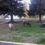 Elk outside the room