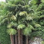 wunderschöne Palmen