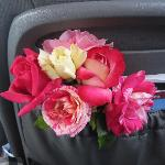 When asked they let me cut some roses for the road. I enjoyed them the rest of our 10 day trip