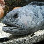 Un pensionnaire du SeaLife