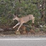 a jumping deer