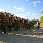 Wagons lined up, ready to go!
