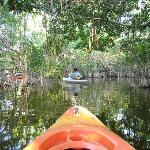 Into The Mangroves