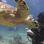 divePro and Turtle
