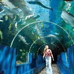 The underwater tunnel