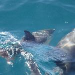Delfine zum Anfassen nahe!