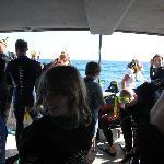 bereit machen fürs Schnorcheln mit den Delfinen