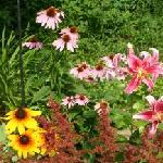 Lush Summertime Gardens