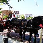 a beautiful horse and carriage