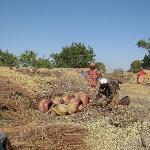 Kalabougou women potters
