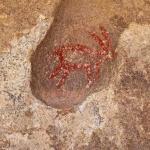 petroglyph at Barker Dam