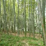 Small bamboo wood