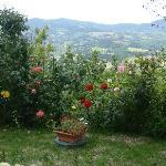 rose&colline